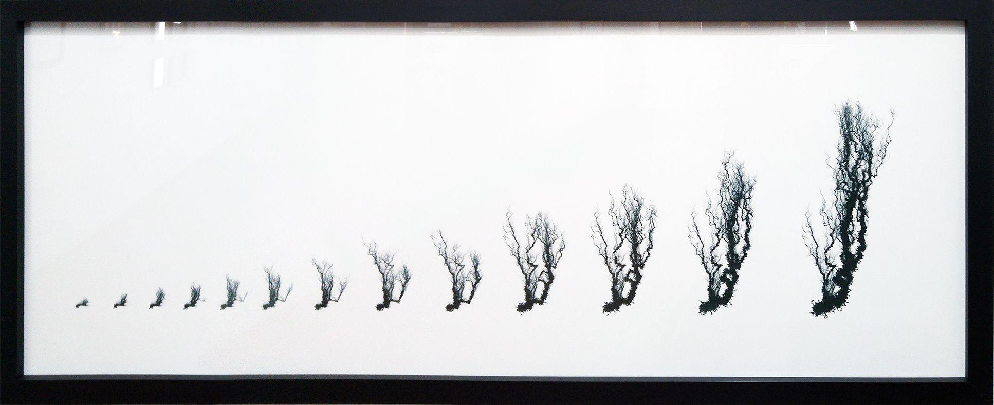 Forgetful Tree B